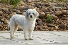 Image of white dog on nature background. Pet.  Royalty Free Stock Images