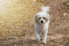 Image of white dog on nature background. Pet.  Stock Photography