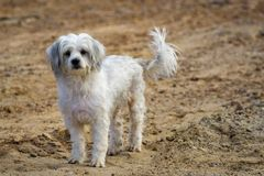 Image of white dog on nature background. Pet.  Royalty Free Stock Photos