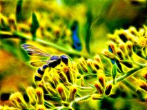 Image of a wild wasp on the flowers of a meadow burdock in neon light Stock Images