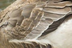 Image of an wing goose. Stock Photos
