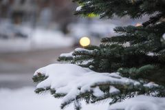 Image of a winter pinetree. The Image of a winter pinetree royalty free stock image