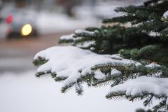 Image of a winter pinetree. The Image of a winter pinetree stock images