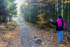 Image of a woman with her dog looking at a map on a path in the middle of the forest stock image