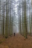 Image of a woman standing on a trail looking for her dog among tall pine trees in the forest royalty free stock photography