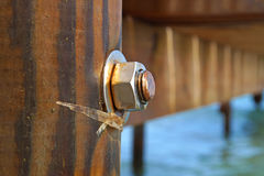 Image of the wood, the bolt, nut in the pier at sea . Royalty Free Stock Image