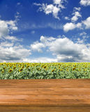 Image of wooden board on  field with sunflowers background Stock Photography