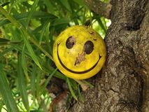 Smiley. stock photo