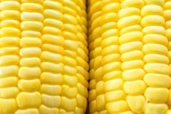 Image of yellow corn background, healthy organic food, bio nutrition royalty free stock photos