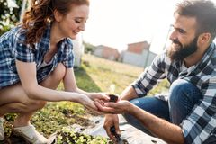 Image of couple of farmers seedling sprouts in garden Stock Image