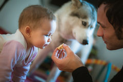 Image of young dad feeds cute little daughter with Royalty Free Stock Photo