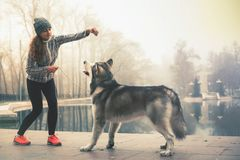Image of young girl with her dog, alaskan malamute, outdoor. At autumn or winter. Domestic pet. Husky Stock Photo