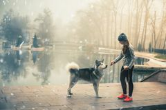 Image of young girl with her dog, alaskan malamute, outdoor royalty free stock photos