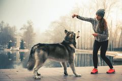 Image of young girl hug her dog, alaskan malamute, outdoor. Image of young girl playing and feeding with her dog, alaskan malamute, outdoor at autumn. Domestic Stock Photo