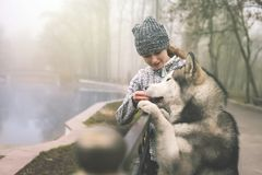 Image of young girl hug her dog, alaskan malamute, outdoor. Image of young girl playing and feeding with her dog, alaskan malamute, outdoor at autumn. Domestic Royalty Free Stock Photos