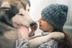 Image of young girl feeding her dog, alaskan malamute, outdoor. Image of young girl playing and feeding her dog, alaskan malamute, outdoor at autumn. Domestic Royalty Free Stock Images
