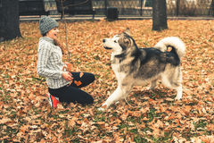 Image of young girl playing with her dog, alaskan malamute Royalty Free Stock Images