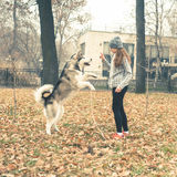 Image of young girl playing with her dog, alaskan malamute Stock Image