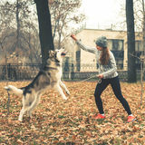 Image of young girl playing with her dog, alaskan malamute Stock Photos