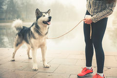 Image of young girl running with her dog, alaskan malamute royalty free stock photography
