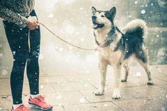 Image of young girl running with her dog, alaskan malamute Stock Images