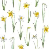 Seamless floral pattern on white background. Hand-drawn flowers - Daffodil. Image for your design projects