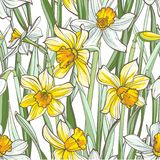 Seamless floral pattern on white background. Hand-drawn flowers - Daffodil. Image for your design projects Royalty Free Stock Images