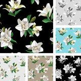 White Flowers of Lily Madonna Lily. Set of Seamless Floral Patterns on light and black background. Image for your design projects Stock Photo