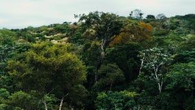 Imagem aérea do zangão da floresta úmida no parque nacional de Amboro, Bolívia fotografia de stock royalty free