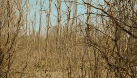 Imagem abstrata do fundo de árvores dos manguezais Fotos de Stock