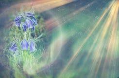 Imagem abstrata e mágica do voo do vaga-lume do brilho no conceito do conto de fadas da floresta da noite Espaço para o texto foto de stock