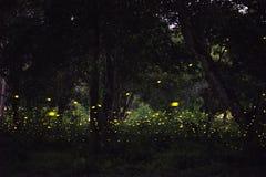 Imagem abstrata e mágica do voo do vaga-lume na floresta da noite imagem de stock