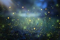Imagem abstrata e mágica do voo do vaga-lume no conceito do conto de fadas da floresta da noite fotografia de stock