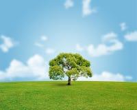 Imagem ambiental Imagens de Stock