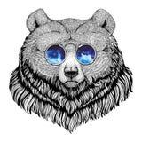 Imagem animal do estilo do moderno do urso pardo para a tatuagem, logotipo, emblema, projeto do crachá Foto de Stock