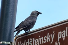 Imagem artística bonita com um revérbero que ilumine um corvo e pedras com um céu escuro e nebuloso no Foto de Stock