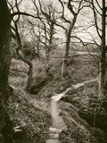 Imagem atmosférica do sepia do estilo do vintage de um passeio estreito que cruza um córrego da floresta fotos de stock
