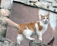 Imagem bonita bonito do estoque do gato imagem de stock