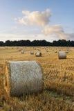 Imagem bonita da paisagem do campo de pacotes de feno no fie do verão Imagem de Stock Royalty Free
