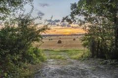 Imagem bonita da paisagem do campo de pacotes de feno no fie do verão Fotos de Stock