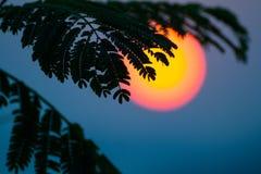 Imagem bonita das folhas mostradas em silhueta contra um sol enorme Fotografia de Stock Royalty Free