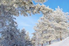 Imagem bonita do inverno landscape Foto de Stock Royalty Free