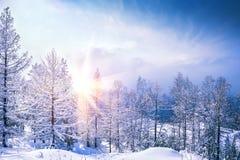 Imagem bonita do inverno landscape Imagem de Stock Royalty Free