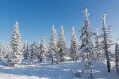 Imagem bonita do inverno landscape Imagem de Stock