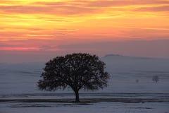 Imagem bonita do inverno landscape Fotografia de Stock Royalty Free