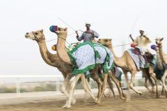 Imagem borrada dos camelos no al Khali Desert da RUB no Quar vazio Fotografia de Stock