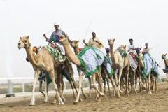 Imagem borrada dos camelos no al Khali Desert da RUB no Quar vazio Imagens de Stock