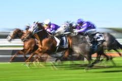 Imagem borrada movimento do grupo da corrida de cavalos Fotografia de Stock Royalty Free
