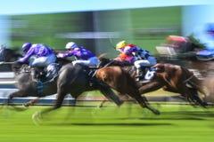 Imagem borrada movimento do grupo da corrida de cavalos Imagem de Stock