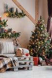 A imagem calma da sala de visitas home moderna interior decorou a árvore de Natal e os presentes, sofá, tabela coberta com a cobe Imagem de Stock